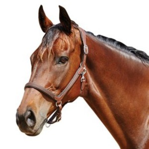 Collegiate Comfitec Leather Headcollar