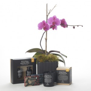 Aromatherapy Co. and Orchid Deluxe Christmas Gift